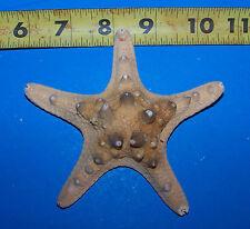 """1 Natural 4""""+ Real Knobby Starfish Display seastar Seashell Craft Item # 130N"""