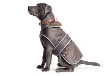 Ancol Stormguard Dog Coat Chocolate Various Sizes