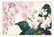 Phalaenopsis Luddmanianam and Phalaenopsis Schilleriana