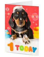 1 2 3 4 5 hoy Dachshund Salchicha Perro organiza Bathtime mensaje Tarjeta De Cumpleaños