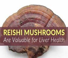 REISHI MUSHROOM Capsules Ganoderma Lucidum 100% Organic Non-GMO