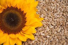 2,5 kg Geschälte Sonnenblumenkerne Top Qualität 2500g Sonnenblumen Kerne