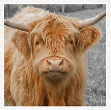 Highland Cow-Qualité Tissu Coussin Ameublement Craft Quilting Panel