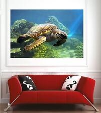 poster poster decorazione da muro Tartaruga ref 13449274 (6 dimensioni)