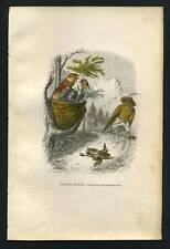 LES ANIMAUX DE GRANDVILLE Le merle et l epervier 1842