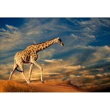 Papier peint géant girafe1478