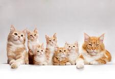 Cute Kitten Sweet Cat Animal 3D Full Wall Mural Photo Wallpaper Home Decal Kids
