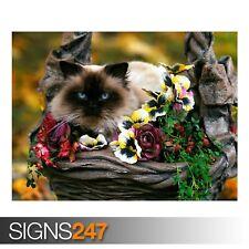 Varietà da giardino (3570) Animale POSTER-Foto Poster Arte Stampa A0 A1 A2 A3 A4