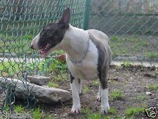CHAMPION DOG CHOKE CHAIN METAL COLLAR  CHROME PLATING RANGE OF SIZES