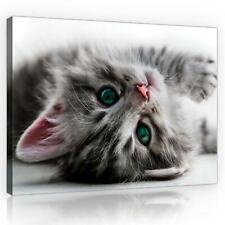 Wandbild  Leinwandbild Kunstdruck 1D20141936 Katze #GESCHENK GRATIS#