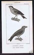 BULLFINCH - CROSSBILL 1824 Ornithology Dumont Print