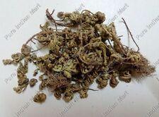Sanjivini Booti Selaginella Bryopteris Sanjeevini Mrit Sanjeevani Dried Herb