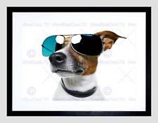 Jack russell chien shades sun glasse cadre noir encadré art imprimé photo B12X9052