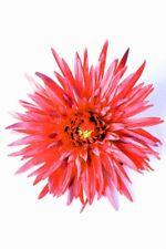 Gerbera Rockabilly Pin Up Blüten Haarspange
