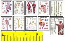 DOLLSHOUSE Mini Fun  -  Doctor Physician Medical  Picture Print Set - CDHM 1:12