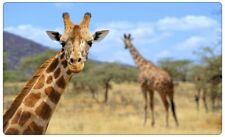Giraffe Afrika Savanne TIer Wandtattoo Wandsticker Wandaufkleber R0286