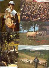 Sheeps Moutons Animal 100 Postcards 1960-1980
