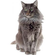 Adhesivo Gato gris 051