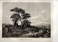 Stampa antica TORRE del GRECO e golfo di Napoli pini e Vesuvio 1876 Old Print