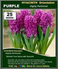 Flower Seeds -HYACINTH Orientalist  PURPLE*  25x  SEEDS