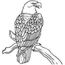 Sticker Décor XXL Oiseau Aigle sur sa branche, 30x28 cm à 60x57 cm (OIS011)
