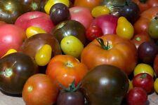 Tomaten aus Russland alte russische Tomaten-Sorten Samen zum Aussuchen