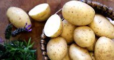 15KG Maris Piper Seed Potatoes - Certified Irish Seed (Class E) Maincrop