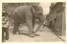 CP PHOTO ANIMAL ELEPHANT ASIE