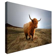 Highland Cow poilu Marron Toile Wall Art Impressions de haute qualité