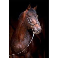 Stickers muraux déco : cheval de profil 1340