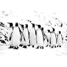 Quadro Stampa su Pannello in Legno MDF Pinguini