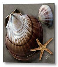 Seashells No 38 Large Pastel Color Fine Art Print on Metal or Acrylic