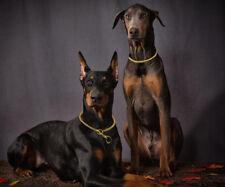 US Dog Show Collar Luxury Titan Choke Chain for Doberman Large Silver Gold