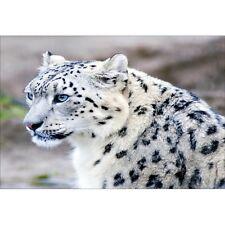 Wandaufkleber deko : Jaguar 1452