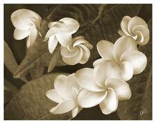 Vintage Plumeria Frangipani Sepia Hawaiian Flower Fine Art Pint