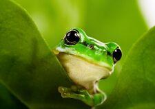 animali fantastici verde in vendita | eBay