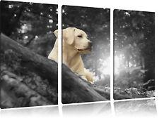 Cucciolo di Labrador Nella Foresta 3-Teiler Quadro su Tel Decorazione Parete