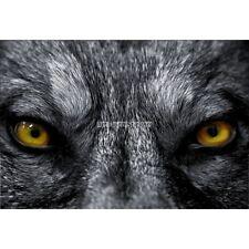 Stickers muraux déco : Yeux de loup 1557
