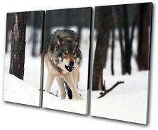 Animals White Wolf Wild TREBLE TOILE murale ART Photo Print