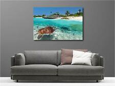 Cuadro pinturas decoración en kit Tortuga de mar ref 92888323