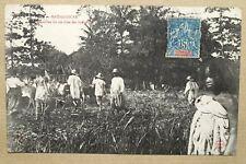 MADAGASCAR - SEMAILLES DU RIZ CHEZ LES INDIGENES