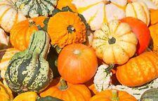 Gourd Small Mixed Non GMO Heirloom Garden Vegetable Seeds Sow No GMO® USA
