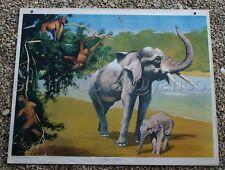 A922 AFFICHE SCOLAIRE CARTON COLIN ELEPHANT OUR SINGE
