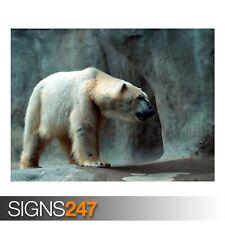 ORSO Polare (3705) Animale POSTER-Foto con POSTER ARTE STAMPA A0 A1 A2 A3 A4