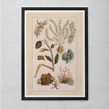 ANTIQUE NATURE PRINT- Nautical Nature Print - Professional Reproduction - Antiqu