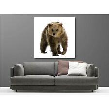 Quadro tela quadrato orso 59134183