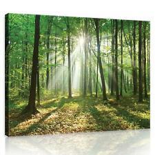 Wandbild  Leinwandbild Kunstdruck 10329_PP-1 Canvas Picture Print Wald in der So