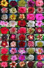 """Adenium Obesum Desert Rose """"separate and label"""" 1100 Seeds 50 Types!"""