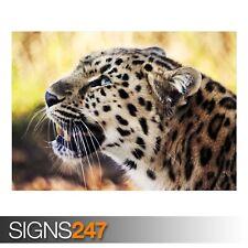 Leopard (3507) Animale POSTER-Foto con POSTER ARTE STAMPA A0 A1 A2 A3 A4