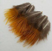 Federn Goldfasan Gelbfranse natur handverlesen 3-6cm, Basteln,Floristik.RAR!